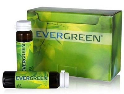EverGreen - T - фото 4715